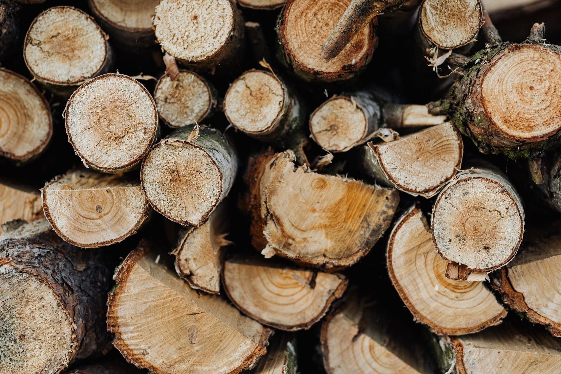woodpile of logs of different sizes